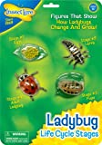 Insect Lore Ladybug Life Cycle Stages