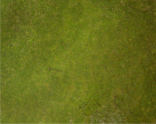 marshalltown-the-premier-line-eslichen4-4-ounce-lichen-elements-concrete-stain