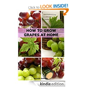 how to grow wine grapes from seeds
