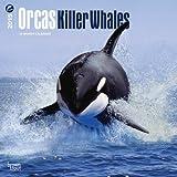 (12x12) Orcas, Killer Whales - 2015 Calendar