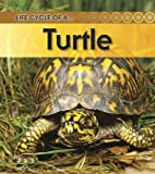 img - for Turtle (Life Cycle of A...(Heinemann Paperback)) book / textbook / text book