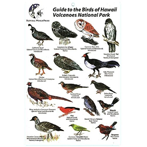 Birds Of Hawaii Volcanoes Card - 1