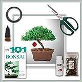 """Bonsai Tree Juniper """"Do It Yourself"""" Kit - Bestseller from Joebonsai"""