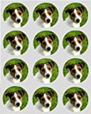 12 Jack russell dog puppy rice paper fairy cup cake 40mm toppers pre cut decoration