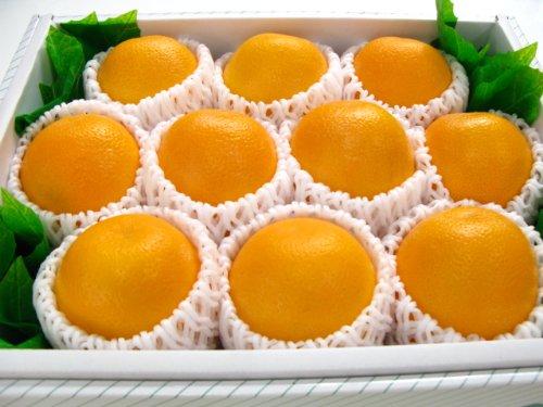 オレンジ10個入り