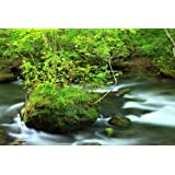 Horizontal Wall Decals Oirase Mountain Stream - 24 inches x 16 inches - Peel and Stick Removable Graphic