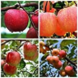 Diansts(TM) Bonsai Apple Tree Seeds Garden Yard Outdoor Living Fruit Plant Fascinating 20PCS
