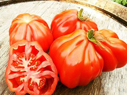 100 Samen Tomate Coeur de Boeuf, Ochsenherztomate, Oxheart Giant