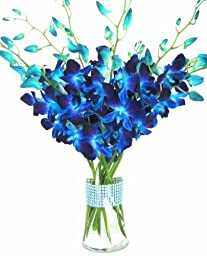 Just Orchids - Blue Dendrobium Orchids with Vase w/ Rhinestone Ribbon