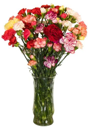 California Mini-Carnations Flower Bouquet - Free Fast Shipping - Single Bouquet - 25 Stems