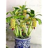 100pcs/bag Rare Banana Seeds,bonsai Fruit Seeds,vegetable Fruit Seed,Organic Heirloom Seeds,plant For Home Garden