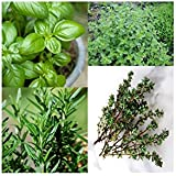 Kitchen Garden Hub - Superb Seeds Packing Of 4 Herb Seeds (2 Pack Of Each Herb).. Basil, Rosemary, Oregano And...