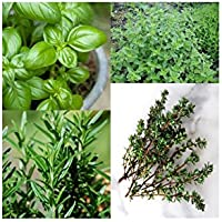 GARDEN CARE Packing Of 4 Herb Seeds (2 Pack Of Each Herb).. Basil, Rosemary, Oregano And Thyme