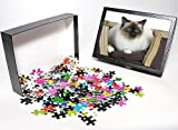 Photo Jigsaw Puzzle of LA-5993 Cat - Bir...