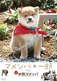 『マメシバ・一郎』from「幼獣マメシバ」[DVD]
