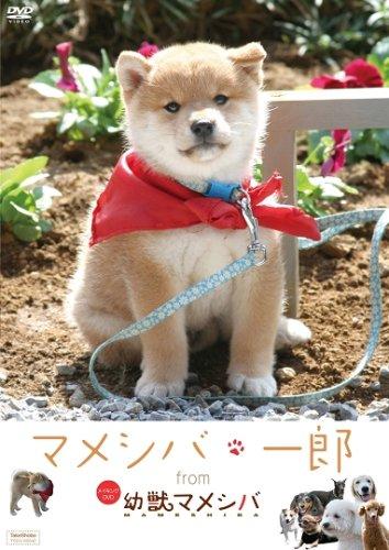 『マメシバ・一郎』 from 「幼獣マメシバ」 [DVD]