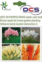DCS (057) 50 PAMPAS GRASS seeds ,rare reed flower seeds for home garden planting Selloana Seeds Garden decoration DIY!-5