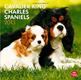 Cavalier King Charles Spaniels 2013 Calendar