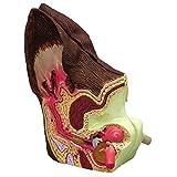Canine/Dog Ear Anatomical Model 2-Sided (Color: Flesh, Tamaño: False)