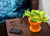 Rolling Nature Good Luck Golden Money Plant in Orange Colorista Pot