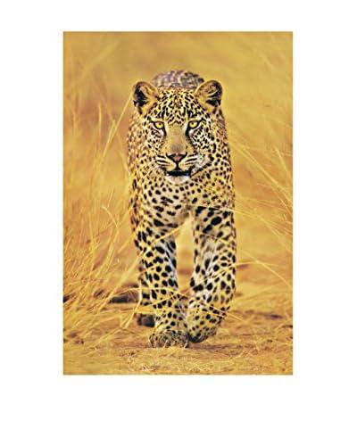 ArtopWeb Pannello Decorativo Cheetah The Big Cat