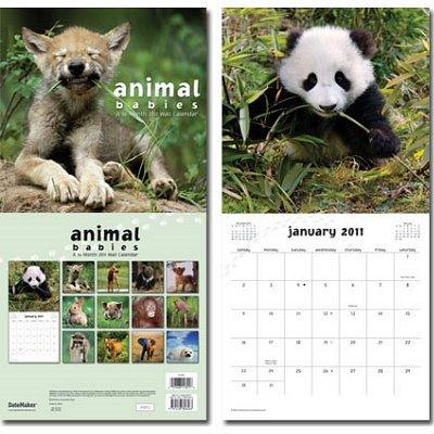 Animal Babies 12-Month Art Wall Calendar 2011 - 12x12