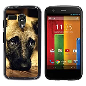 Amazon.com: German Shepherd Dog Anatolian Pet - Aluminum Metal&Hard