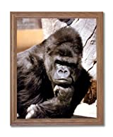 Tropical Monkey Gorilla Tree Animal Wildlife Home Decor Wall Picture Oak Framed Art Print