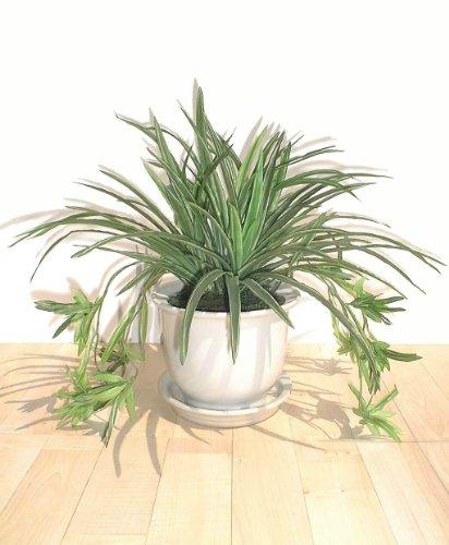 pianta-ragno-36cm-cespuglio-artificiale-senza-vaso