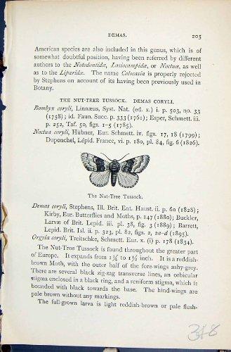 histoire-naturelle-1896-de-lloyd-kirby-de-papillons-de-demas-de-touffe-decrou-arbre