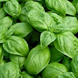 Basil Seeds - Large Leaf Italian Sweet Basil Heirloom Seeds ? ORGANIC NON-GMO Basil Seeds (100+ seeds) ? by PowerGrow Systems