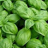 Basil Seeds - Large Leaf Italian Sweet Basil Heirloom Seeds...