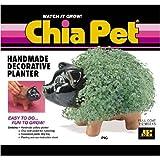 Chia Pet Handmade Decorative Planter- Pig