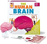 img - for The Human Brain: Action Book (Science Action Books (Running Press)) book / textbook / text book