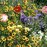Drought Resistant-Xeriscape Wildflower Mix 1,000+ Seeds