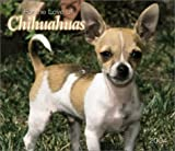 For the Love of Chihuahuas 2004 Calendar