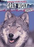 Grey Wolf (Animals Under Threat)