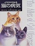 ヅラ猫は以外とビビり屋さん。大五郎ダンボールに隠れる!