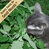 Lawn & Patio - 200 Seeds, Catnip Herb (Nepeta cataria) Seeds By Seed Needs