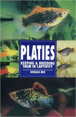 Platies: Keeping and Breeding Them in Captivity