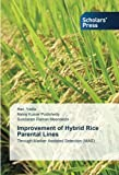 img - for Improvement of Hybrid Rice Parental Lines: Through Marker Assisted Selection (MAS) book / textbook / text book
