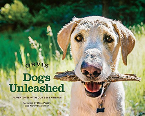 dogs-unleashed-adventures-with-our-best-friends