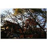 ポストカード「大阪城と紅葉」大阪府大阪市postcard絵はがきハガキ葉書