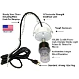 Squirrel Evictor Strobe Light and Rat Repeller