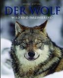 Der Wolf Wild und faszinierend