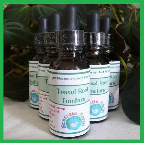 Kava Kava Tincture ~ 1 Ounce Bottle ~