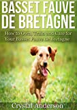 Basset Fauve de Bretagne: How to Own, Train and Care for Your Basset Fauve de Bretagne