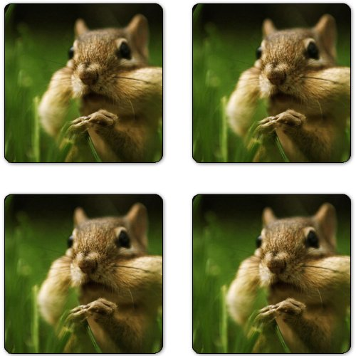 Chipmunk Rubber Square Coaster set (4 pack) Great Gift Idea
