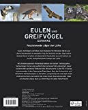 Image de Eulen und Greifvögel Europas: Faszinierende Jäger der Lüfte im Porträt