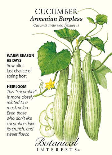 Armenian Burpless Cucumber Seeds - 2 grams - Botanical Interests